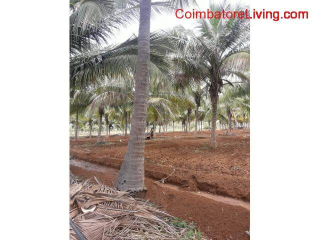 coimbatore - 11 acre Agri Land for sale in Coimbatore - Sathy Road - Kovilpalayam - 2/3