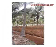 coimbatore - 11 acre Agri Land for sale in Coimbatore - Sathy Road - Kovilpalayam