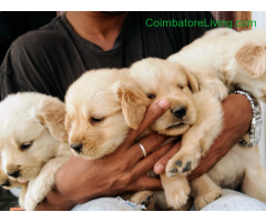 Pet Sale in Coimbatore - Lucky Licks