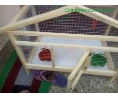 coimbatore - Cage for sale - Image 2/4