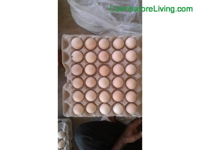coimbatore - Egg For Sale - 1/1