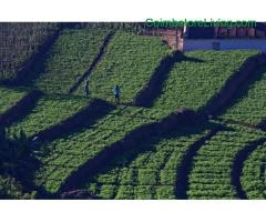 coimbatore - DTCP approved Residential Plots for sale at Kodaikanal - Image 48/49