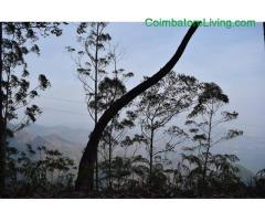 coimbatore - DTCP approved Residential Plots for sale at Kodaikanal - Image 49/49