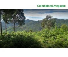 coimbatore - DTCP approved Residential Plots for sale at Kodaikanal