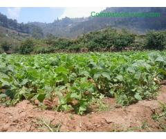 coimbatore - DTCP approved Residential Plots for sale at Kodaikanal - Image 37/49