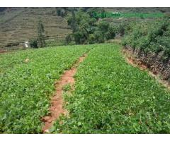 coimbatore - DTCP approved Residential Plots for sale at Kodaikanal - Image 38/49