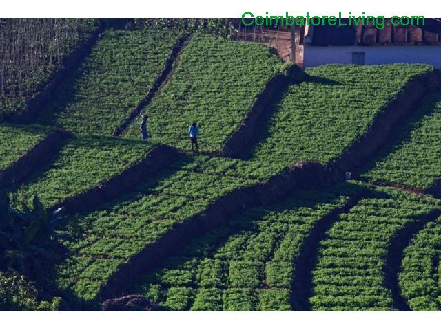 coimbatore - DTCP approved Residential Plots for sale at Kodaikanal - 48/49