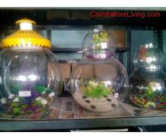 coimbatore -fish bowls for sale